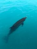 JoJo the dolphin!
